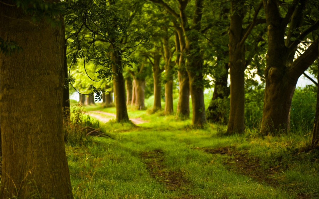 summer-green-forest-path-wallpaper-7465-7753-hd-wallpapers