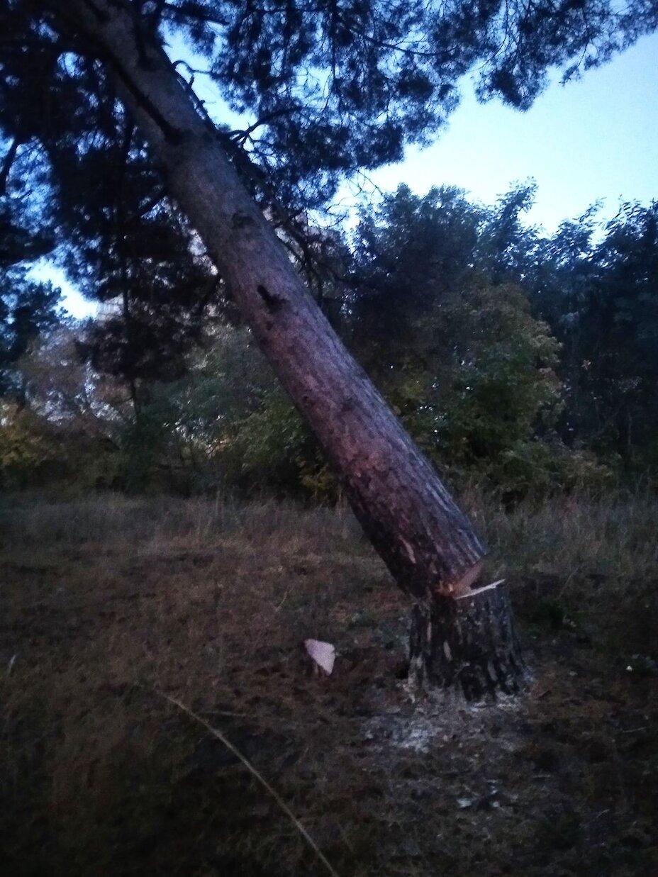 На місці скандальної забудови в Обухові вночі різали дерева